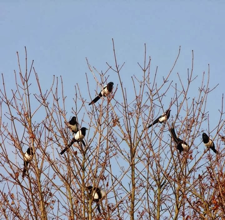 Glad Tidings Of The Eighth Magpie