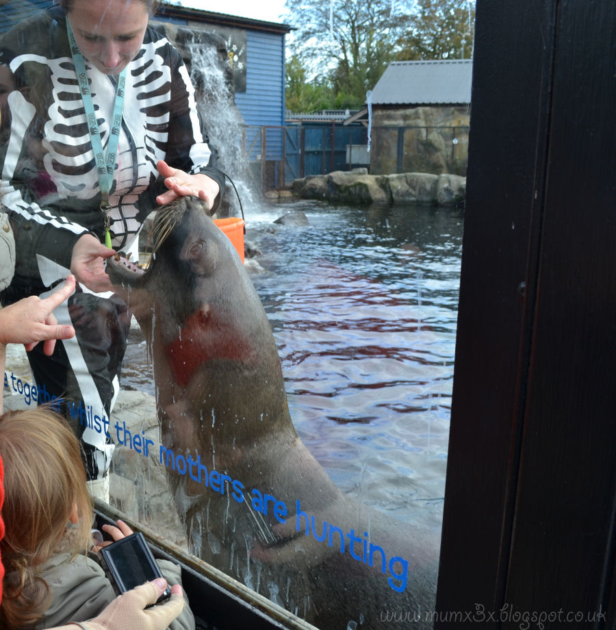 Sea lion roar at colchester zoo @ ups and downs, smiles and frowns