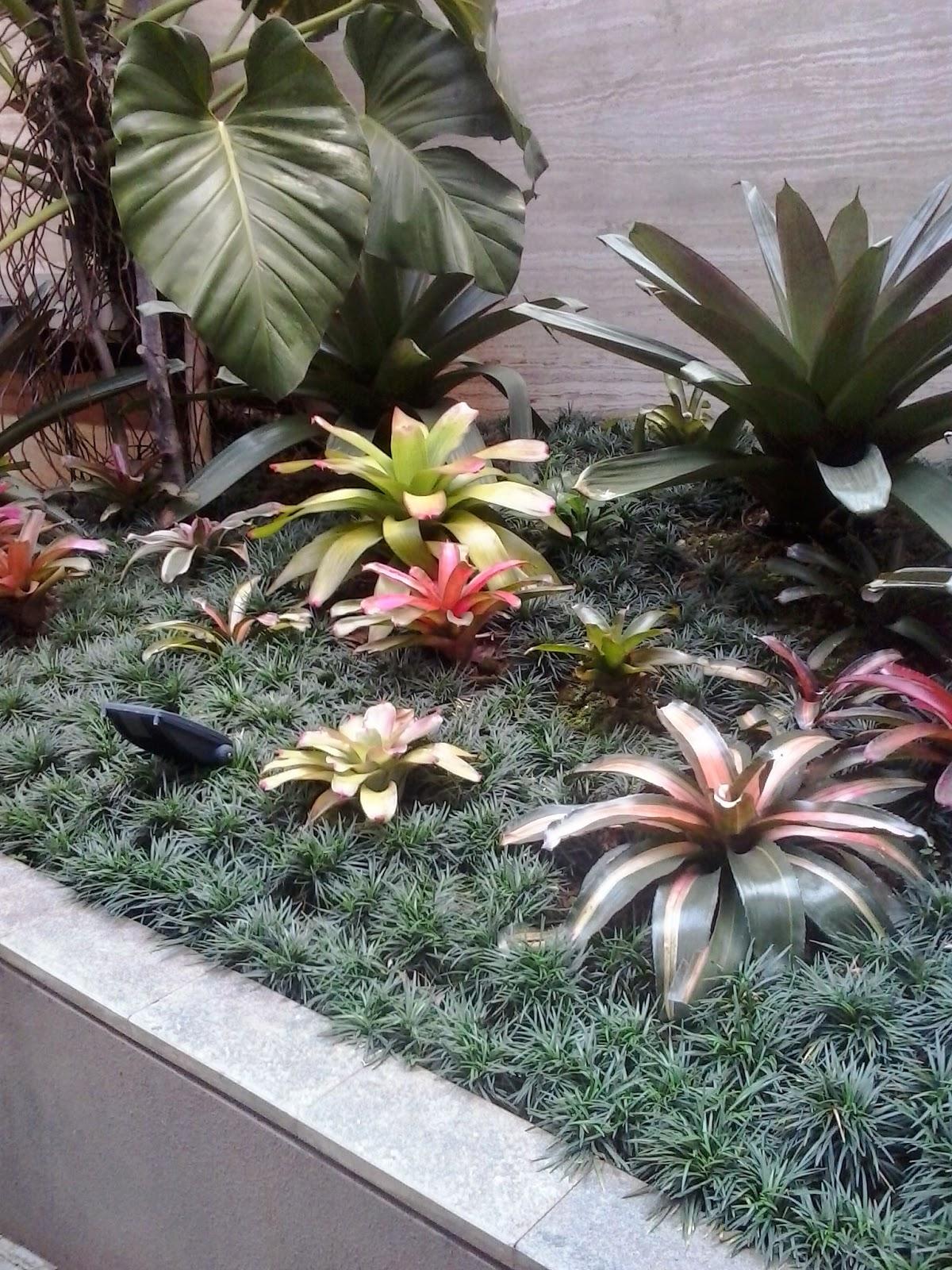 jual tanaman hias bogor | bromelia hias