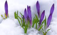 Весне мы рады!