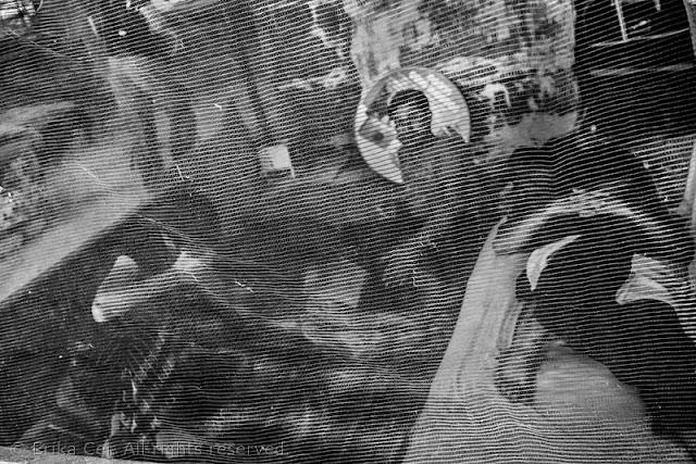 Silos Trieste migranti tenda