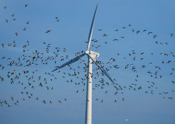 Wind Energy by Brian Bullis on Prezi