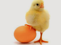 Ayam Atau Telur Duluan? Terpecahkan Oleh Mahasiswa
