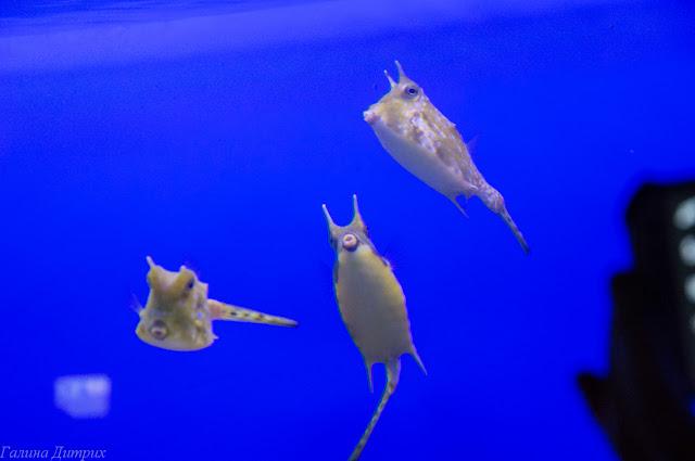 Путешествия: Москвариум (океанариум на ВДНХ). Фото-отчет о посещении.