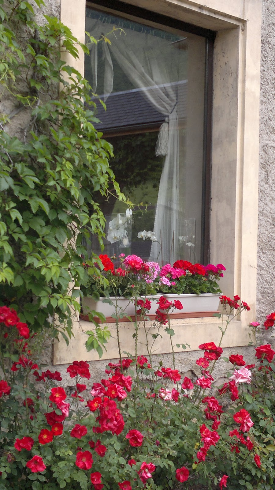 Archi tetti fascino francese - Finestra a due archi ...