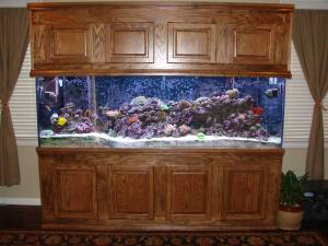 Giant aquariums 300 gallon saltwater fish tank reef tank for 300 gallon fish tank