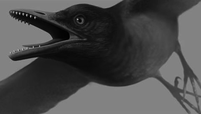 testere dişli kuş