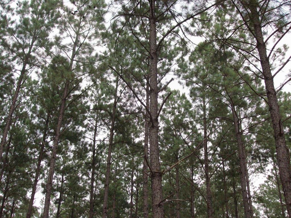 Private Forest Landowner