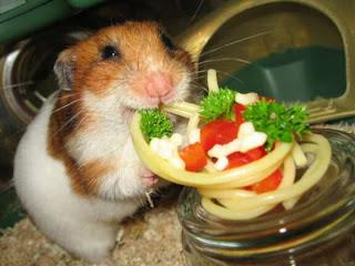 hamster comida