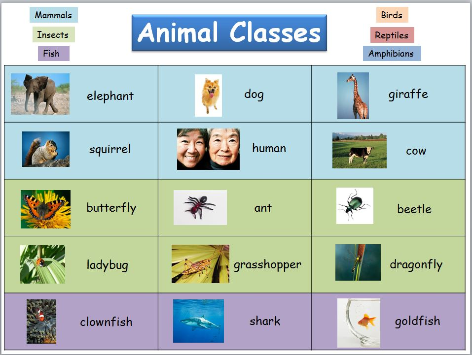 Primary Inspiration: Free Animal Classes Reference Chart