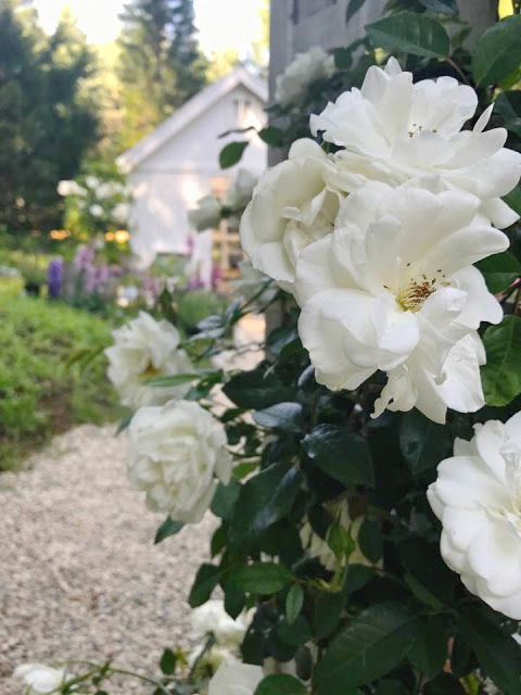 This Week Since I Have Gardens And Planting On My Mind Am Sharing A Post That Shares Few Of Favorite Plants For Cottage Garden