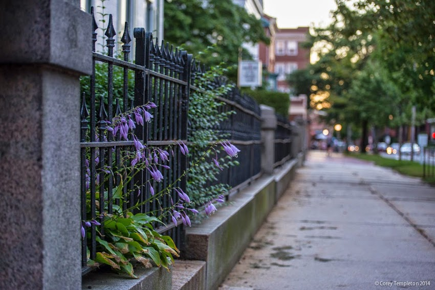 September 2014 Flowers and Fence on State Street in West End of Portland, Maine. Photo by Corey Templeton.