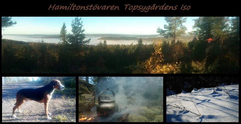 SJCH NOJCH SUCH Topsygårdens ISO