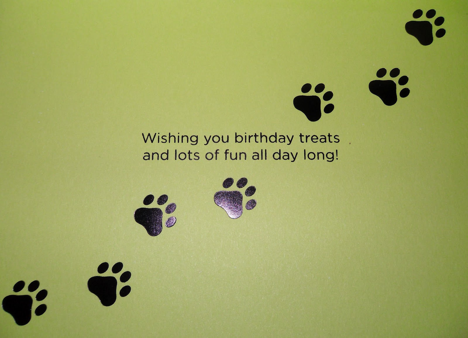Singing Birthday Dogs Related Keywords Suggestions Singing – Birthday Card from Dog