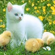 Blog de los gatitos