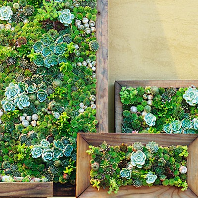 how to build a living wall outdoors