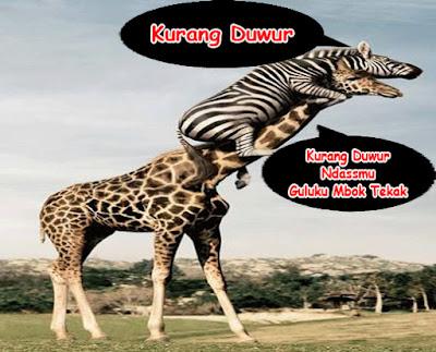 gambar kata hewan lucu