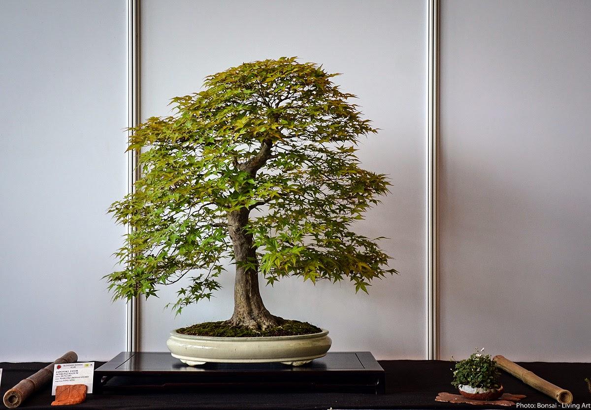 Bonsai Living Art Photos From The VI International Bonsai