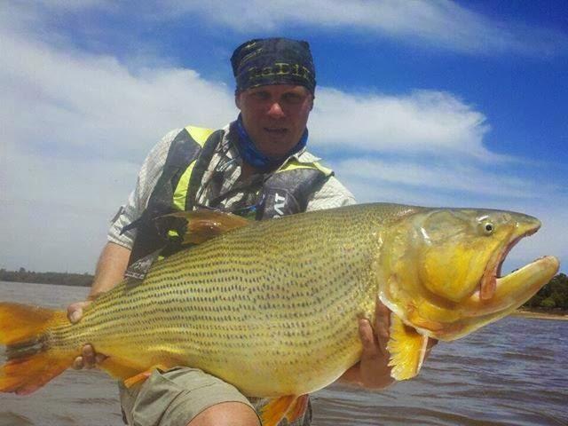 Goldendorado fishing report new world record fishing for Golden dorado fish