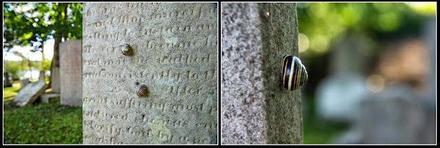 Nova Scotia; Lunenberg; Graveyard;Tombstone; Snail