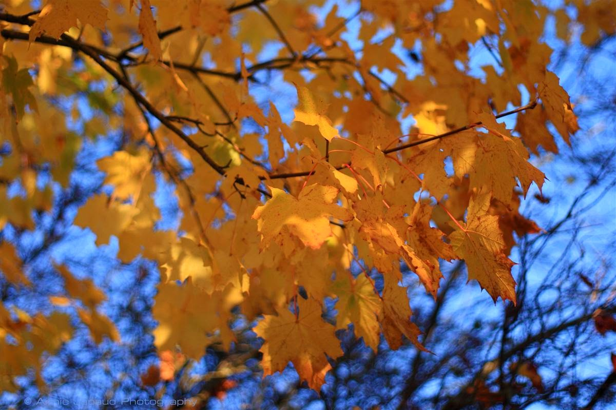 image of a tree with golden leaves