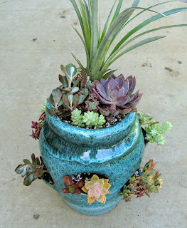 succulent strawberry pot