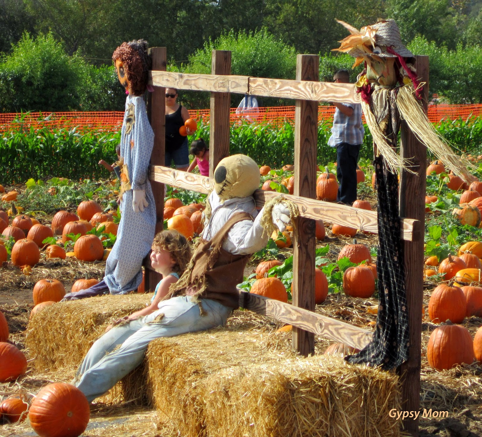 Pumpkins and scarecrows at Tanaka Farms in Irvine, CA