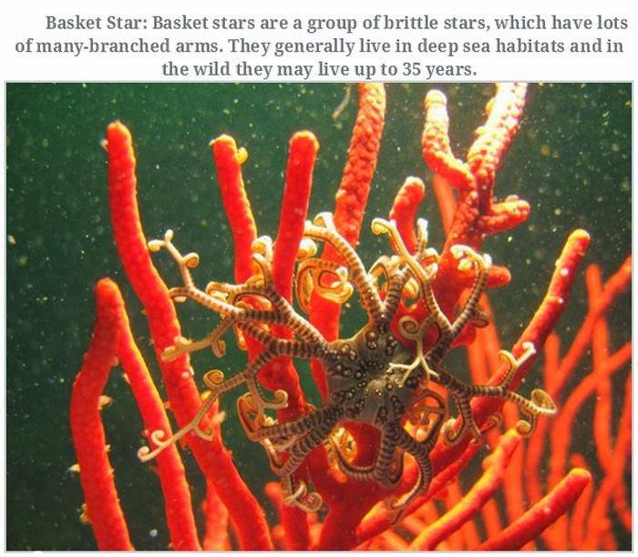 Weird animals (20 pics), strange animal pictures, basket star