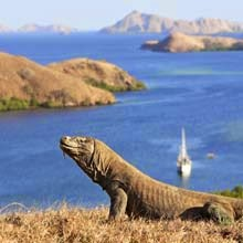 Komodo Island Live on Board Tour Package