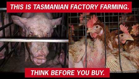 factory farming cruelty essay checker