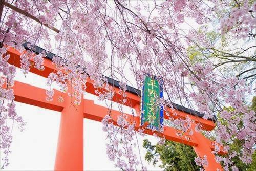 京都市北区|平野神社