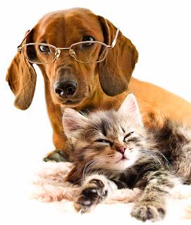 Perrito y gatito amigos por siempre - Mascotas