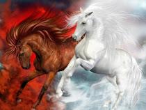ألبومات الصور الفنية للخيول