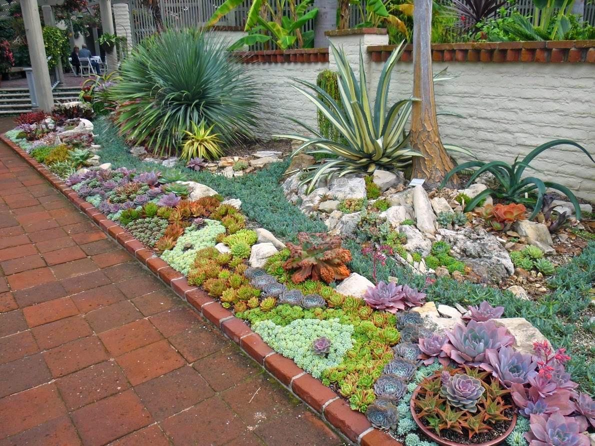 jardim plantas suculentasAs suculentas ficam excelentes quando