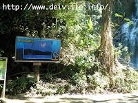 San Teodoro: Tamaraw Falls in Oriental Mindoro 4