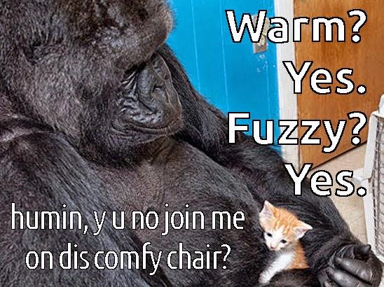 meme of kitten and gorilla