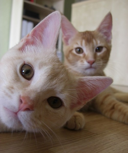 funny cat pictures, funny photobomb, photobomb by cats