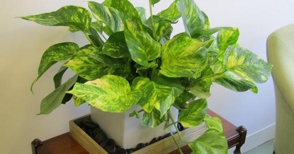 Plantas de interior podem aumentar a sua sa de ci ncia online sa de tecnologia ci ncia - Plantas de interior online ...