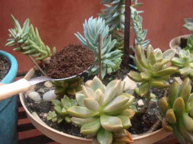 mini jardins em vaso:Comecei pela limpeza, varrendo com o pincel para retirar a sujeira, e