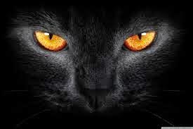volevo un gatto nero testo traduzione