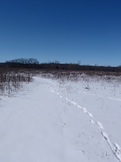Fox Tracks on the Ice Age Trail