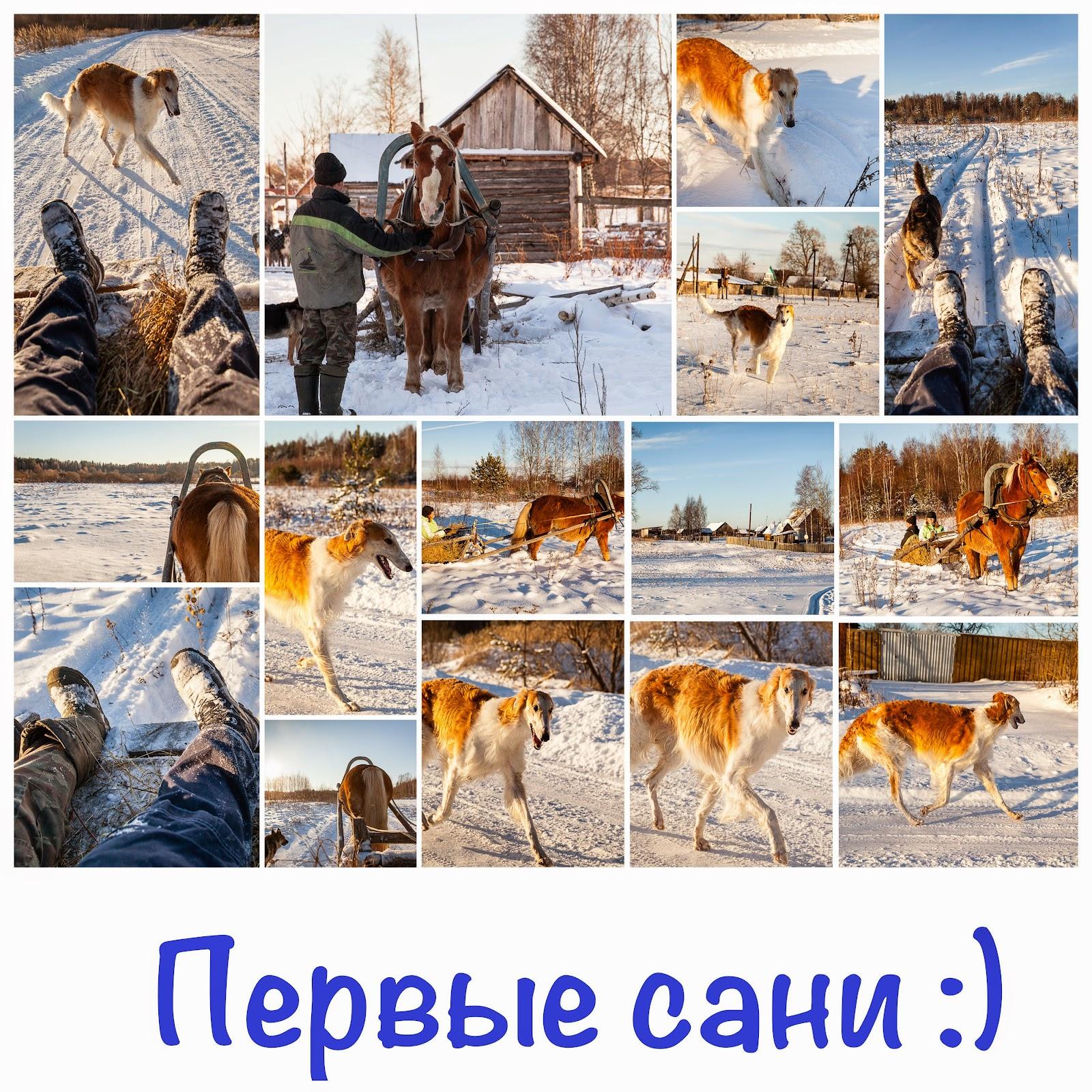 Конные прогулки и катания на санях в Твери и Тверской области.