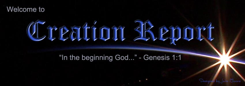 Creation Report