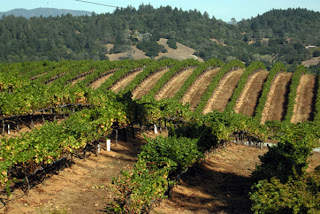 view of-winecountry