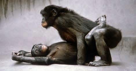 bonobo know!