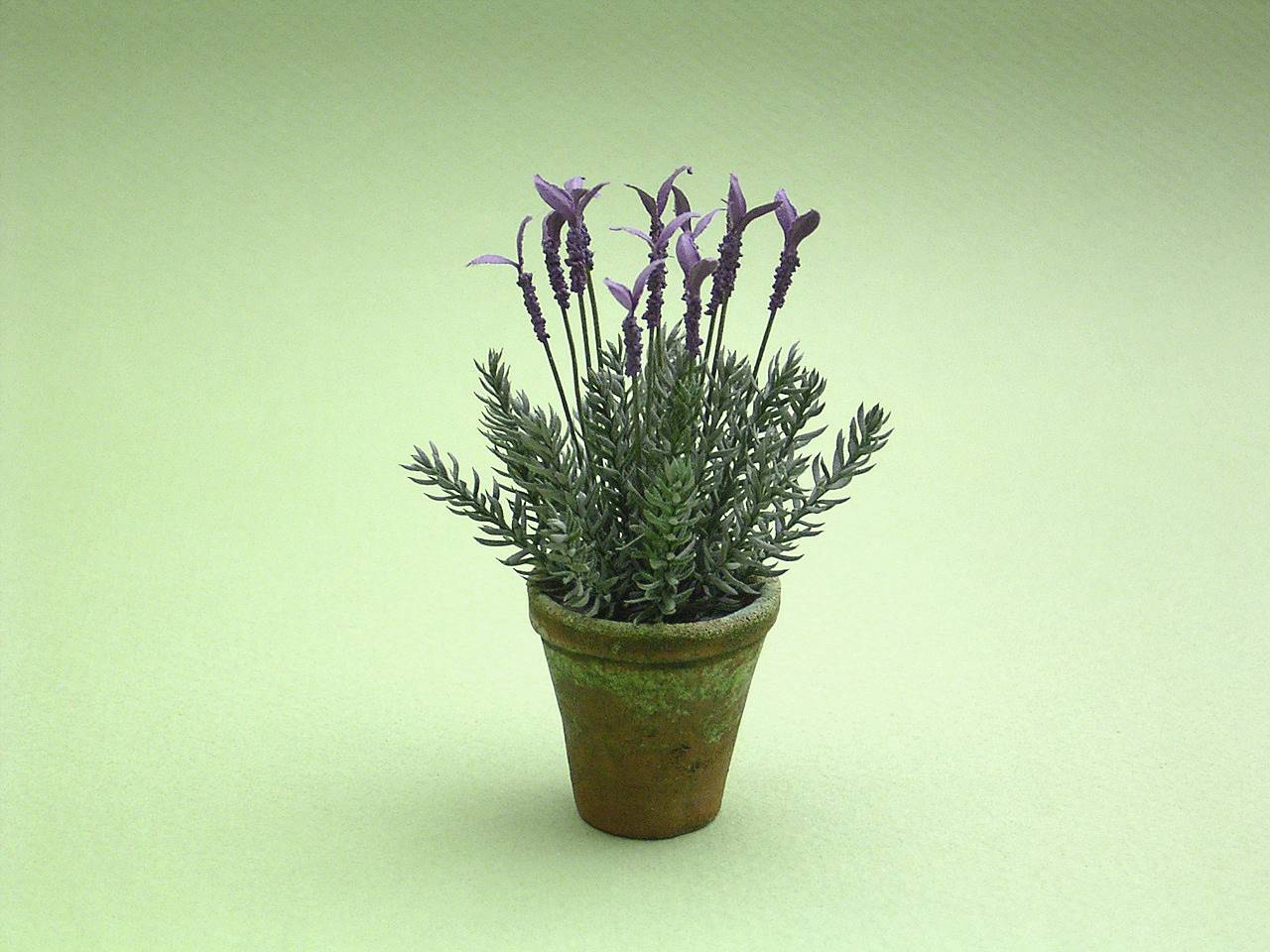 French Lavender + Erica Moss