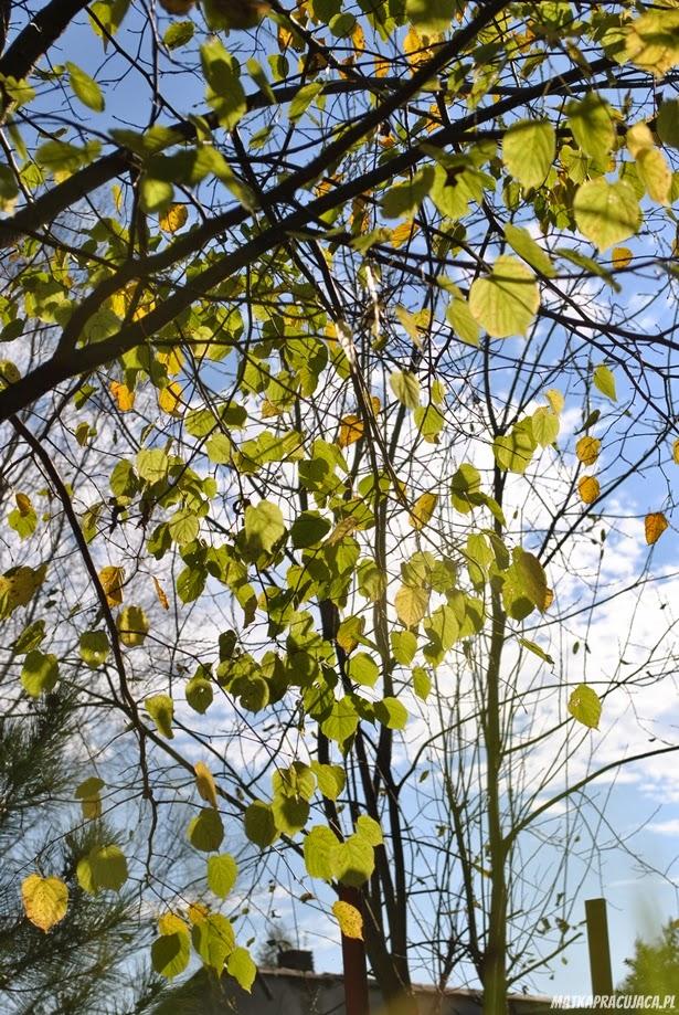 miły już jesień, jesień, wordless Wednesday, niema środa, Eleni, fotografia, przyroda, pory roku, wieś,