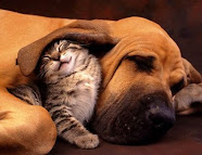 Declaração dos Direitos dos Animais