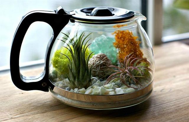 DIY terrario en cafetera - Blog Mi boda