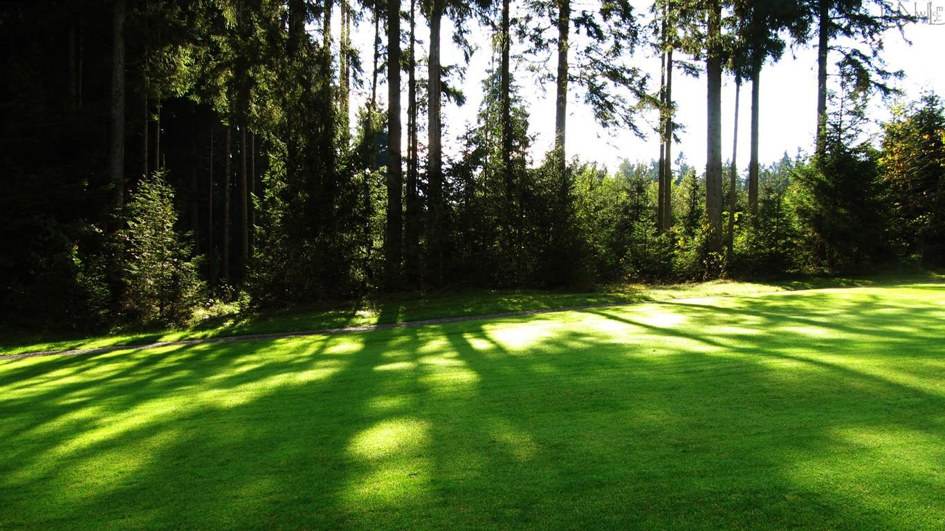 http://2.bp.blogspot.com/-AAKiNZVRo8g/UM168PQ-l2I/AAAAAAAABv4/yg3SIZ_BfSU/s1600/hd+wallpapers+of+greenery+454.jpg